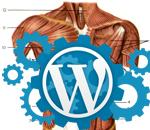 Миниатюра к посту Анатомия темы WordPress